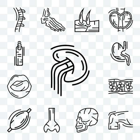 Set Of 13 transparent icons such as Human Spleen, Skin, Skull Side View, Big Nose, Muscle, Cellulite, Tongue and Mouth, Stomach with Liquids, web ui editable icon pack, transparency set