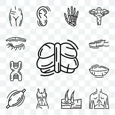 Set Of 13 transparent editable icons such as Human Cerebellum, Men Back, Knee, Female Trunk, Muscle, Lips, DNA Sequence, Toe, Eyebrow, web ui icon pack Illustration
