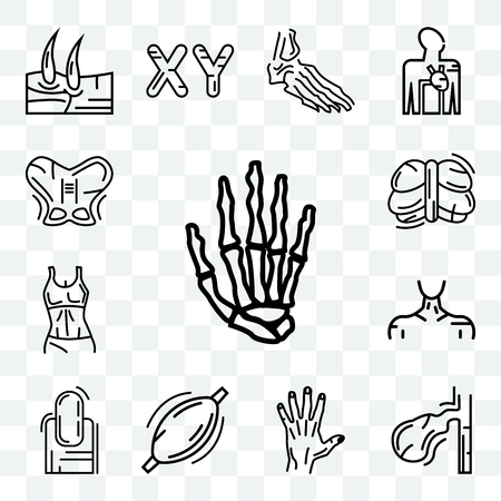 Set Of 13 transparent editable icons such as Hand Bones, Gallbladder, Men Hand, Human Muscle, Long Nail, Neck, Female Trunk, Cerebellum, Hip, web ui icon pack