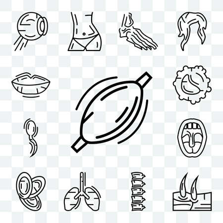 Set Of 13 transparent editable icons such as Human Muscle, Men Knee, Spine Bone, Lungs, Dishes Stack, Tonsil, Two Spermatozoon, White blood cell, Lips, web ui icon pack