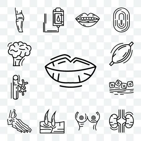 Ensemble de 13 icônes modifiables transparentes telles que les lèvres humaines, les deux reins, la poitrine, le genou des hommes, les os du pied, les muqueuses, les vaisseaux sanguins, les muscles, le cerveau, le pack d'icônes web ui