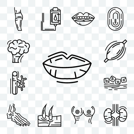 Set Of 13 transparent editable icons such as Human Lips, Two Kidneys, Breast, Men Knee, Foot Bones, Mucous Membrane, Blood Vessel, Muscle, Brain, web ui icon pack Vectores