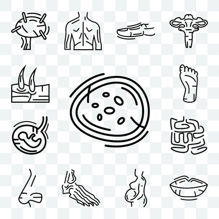 Set Of 13 transparent editable icons such as Basophil, Human Lips, Woman Pregnant, Foot Bones, Nose Side View, Small Intestine, Fetus, Foot, Men Knee, web ui icon pack