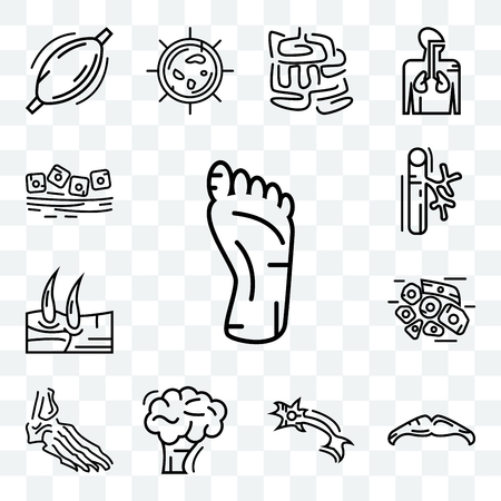 Set Of 13 transparent editable icons such as Human Foot, Big Moustache, Neuron, Brain, Foot Bones, Skin Cells, Men Knee, Blood Vessel, Mucous Membrane, web ui icon pack