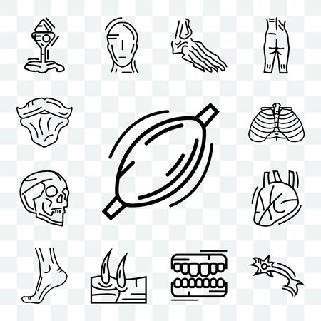 Set Of 13 transparent editable icons such as Human Muscle, Neuron, Teeth, Men Knee, Buttocks, Heart, Skull, Ribs, Beard, web ui icon pack Illustration