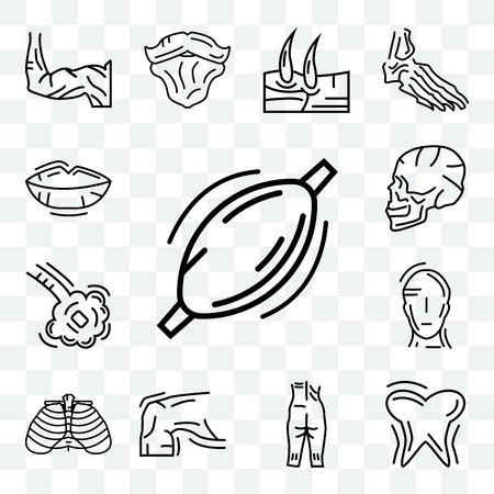 Set Of 13 transparent editable icons such as Human Muscle, Tooth and Gums, Ankle, Skin, Ribs, Head, Bronchioles, Skull Side View, Lips, web ui icon pack Illustration