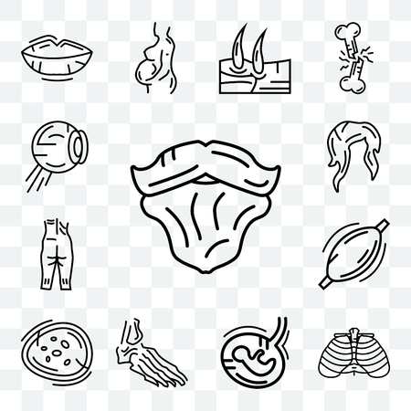 Set Of 13 transparent editable icons such as Men Beard, Human Ribs, Fetus, Foot Bones, Basophil, Muscle, Ankle, Female Hair, Eyeball Structure, web ui icon pack