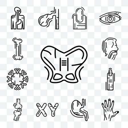 Set Of 13 transparent icons such as Human Hip, Men Hand, Stomach with Liquids, Masculine Chromosomes, Bones Joint, Finger, Immune System, web ui editable icon pack, transparency set