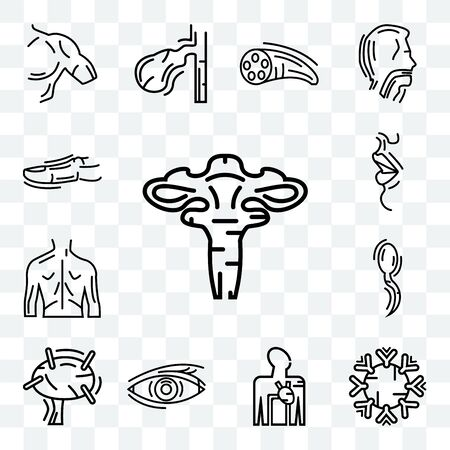 Set Of 13 transparent editable icons such as Human Uterus, Immune System, Blood Supply, Lymphonodus, Two Spermatozoon, Men Back, Big Lips, Toe, web ui icon pack