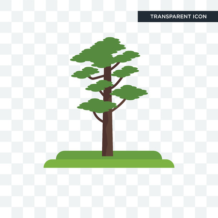Pine tree vector icon isolated on transparent background, Pine tree logo concept Vectores