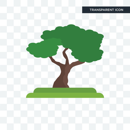 Chestnut Oak tree vector icon isolated on transparent background, Chestnut Oak tree logo concept