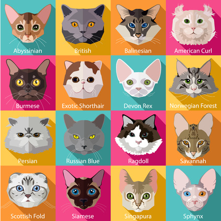 koty: Zestaw płaskich popularnych ras kotów ikon. Ilustracji wektorowych. Zdjęcie Seryjne
