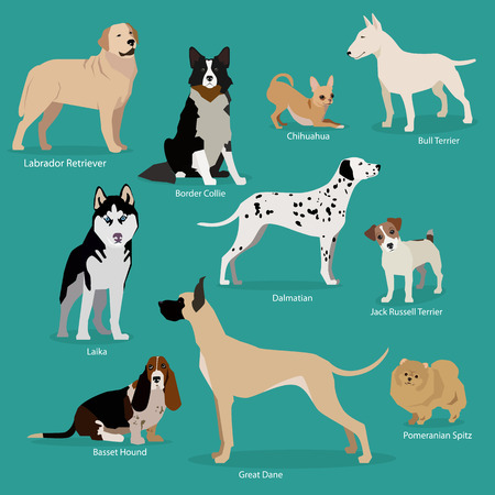 Set of flat sitting or walking cute cartoon dogs. Popular breeds/ Labrador Retriever, Chihuahua, Border Collie, Bull Terrier, Laika, Dalmatian, Jack Russell Terrier, Great Dane, Basset Hound, Pomeranian Spitz. Flat style design isolated icons. Vector illu