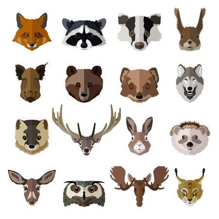 lobo: Conjunto de animales del bosque se enfrenta a iconos aislados. Diseño de estilo Flat. Ilustración del vector. Vectores