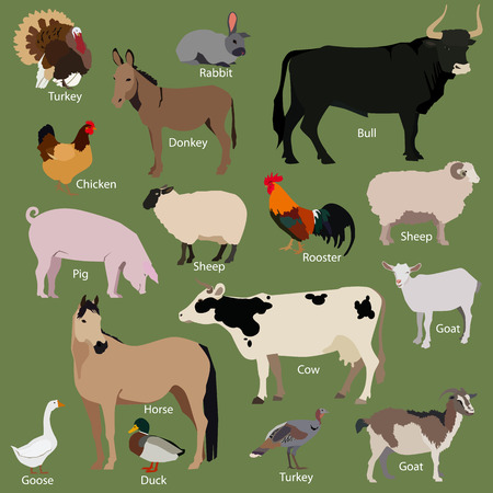 poultry farming: Set of farm animals icons. Flat style design. Vector illustration.