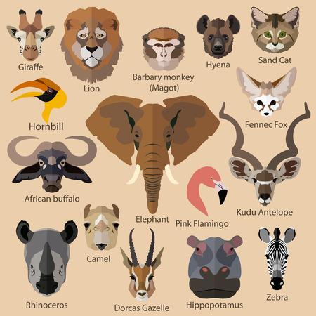 the zoo: Conjunto de animales africanos se enfrenta a iconos aislados. Dise�o de estilo Flat. Ilustraci�n del vector.