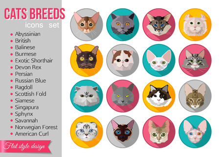 abyssinian cat: Set of flat popular breeds of cats icons. Vector illustration.
