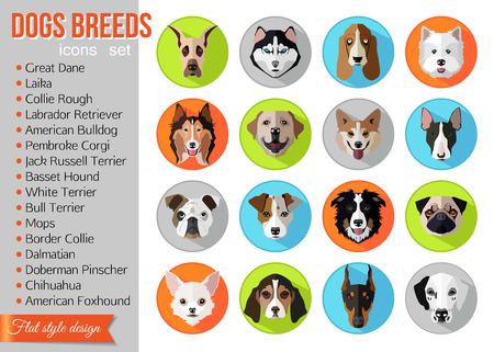 cane chihuahua: Set di razze popolari piatti di icone cani. Illustrazione vettoriale. Vettoriali