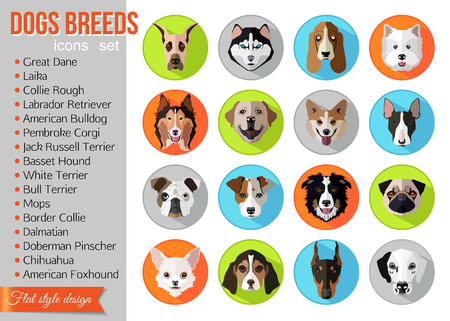 border collie: Set of flat popular breeds of dogs icons. Vector illustration.