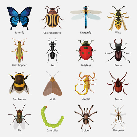 Set of insects flat style design icons. Butterfly, Colorado beetle, Dragonfly, Wasp, Grasshopper, Ant, Ladybug, Beetle, Bumblebee, Moth, Scorpio, Acarus, Fly, Caterpillar, Spider, Mosquito. Vector illustration.