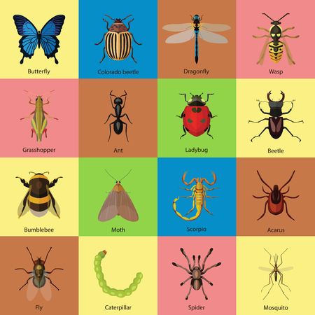 insect mosquito: Set of insects flat style design icons. Butterfly, Colorado beetle, Dragonfly, Wasp, Grasshopper, Ant, Ladybug, Beetle, Bumblebee, Moth, Scorpio, Acarus, Fly, Caterpillar, Spider, Mosquito. Vector illustration.