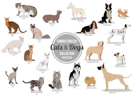 dog and cat: Set of flat sitting or walking cute cartoon dogs and dogs. Popular breeds. Flat style design isolated icons. Vector illustration. Illustration