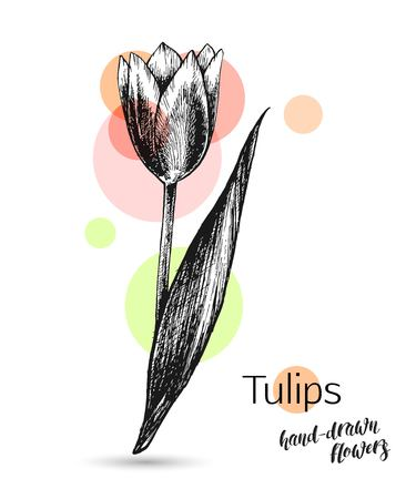 isolated flower: Tulips flower for wedding or birthday card. Monochrome tulips flower isolated on white background. Tulips branch, flowers and leaves. Vector illustration.