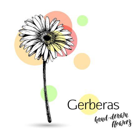 結婚式や誕生日カードのガーベラの花。モノクロ ガーベラの花は、白い背景で隔離。ガーベラ支店、花と葉。ベクトルの図。  イラスト・ベクター素材