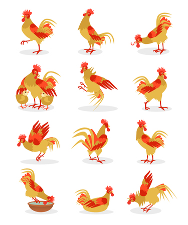 chinese new year illustration: Set of roosters portrait cartoon illustration for the Chinese New Year. Cocks icon isolated on white background.