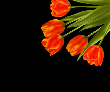 Realistic vector bouquet of tulips on black background