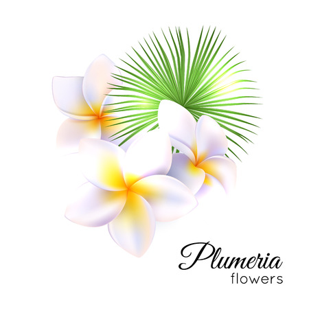 tahitian: Tropical flowers plumeria, frangipani vector illustration