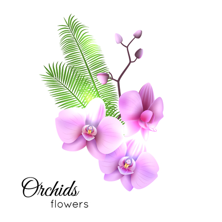 Purple streaked orchids flower, branch Vector illustration