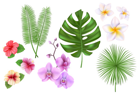 Set of exotic tropical flowers, plants, leaves Vector illustration with realistic palm, monstera leaf, hibiscus, orchid.