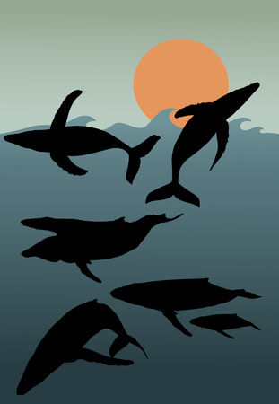 orenge: Silhouettes of whales in different poses with sun low in sky Illustration