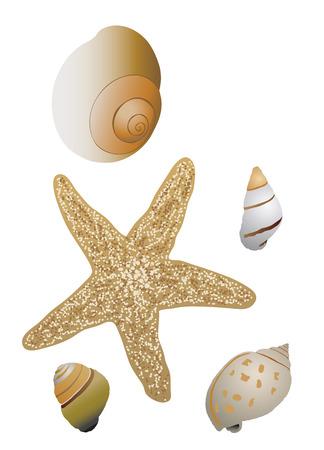 conchas: Conchas y estrellas de mar de fondo blanco.
