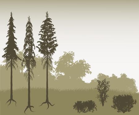 hoog gras: Veelzijdige landschap instellen met bomen, borstels en gras.