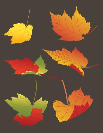 illustration of Falling Autumn Leaves