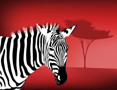 exoticism: Zebra By an Acacia Tree Illustration
