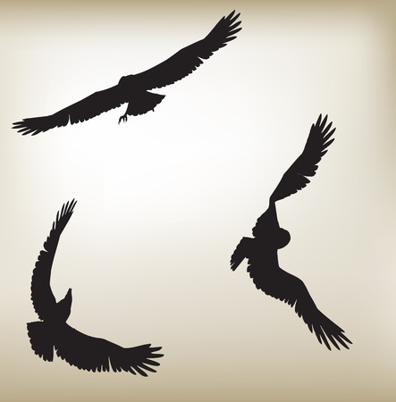 animal silhouette: Three eagles flying in different posistions