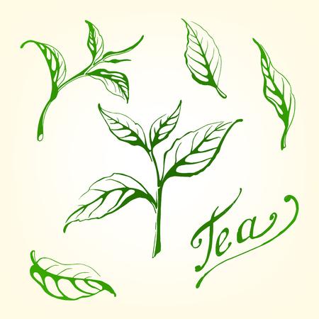Verzameling van theeblaadjes. Groen, zwart, Pekoe-thee in grafische stijl, hand-drawn vectorillustratie.