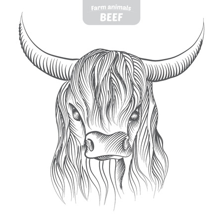 Head pattern highland cattle cow in a graphic style, hand-drawn vector illustration.