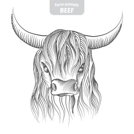 Kopf-Muster Hochland-Rinder Kuh in einem Grafik-Stil, von Hand gezeichnete Vektor-Illustration.