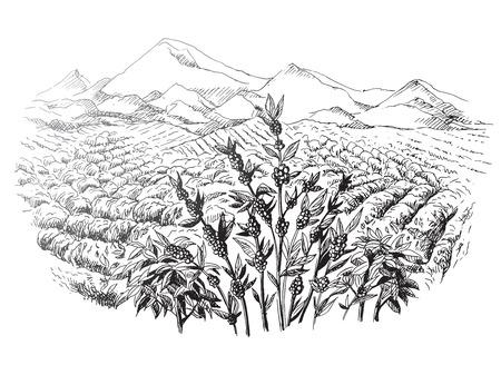 Koffie plantage landschap in grafische stijl hand getekende vector illustratie. Stock Illustratie
