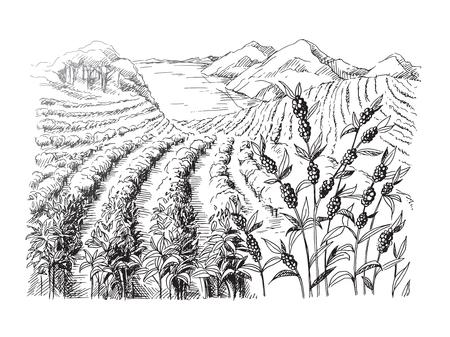 Kaffeeplantage Landschaft im grafischen Stil von Hand gezeichnet Vektor-Illustration.