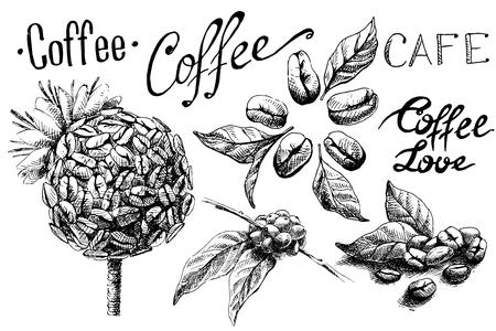 Set van koffiebonen en bladeren en kop in grafische stijl handgetekende vectorillustratie.