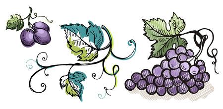 Waterverf rijpe die druif met bladeren op wit in grafische stijl hand-drawn vectorillustratie worden geïsoleerd.