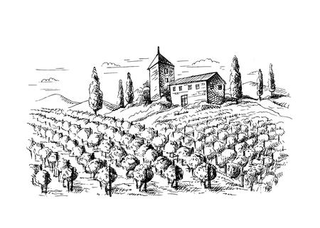 Hileras de plantas de uva de viñedos y casa en estilo gráfico, ilustración vectorial dibujado a mano. Ilustración de vector
