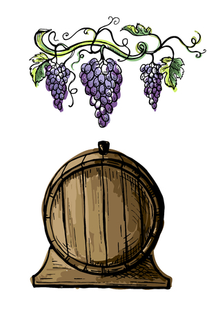 Watercolor grape branches and wine barrel isolated on white background in graphic style hand-drawn vector illustration Illustration