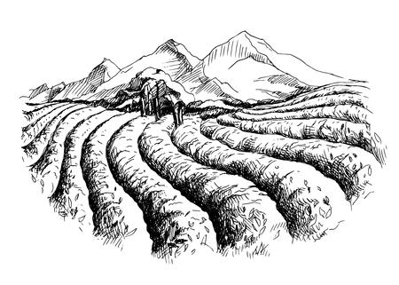 Plantation de plantation de paysage en style graphique, illustration vectorielle dessinée à la main.