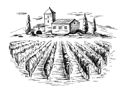 Hileras de plantas de uva de viñedos y casa en estilo gráfico, ilustración vectorial dibujado a mano.